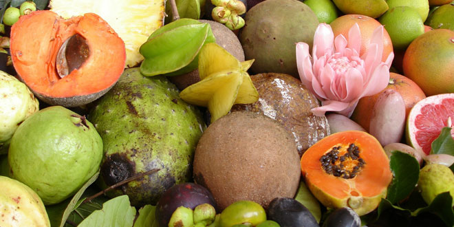 comidaecol[ogica2