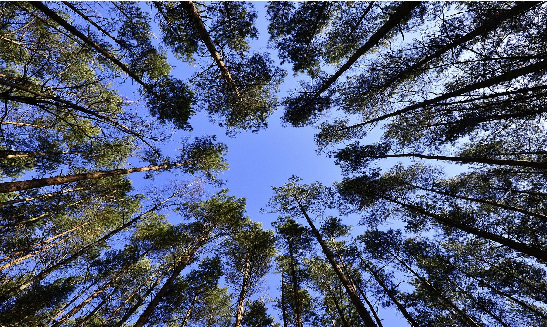 Dile no a la deforestación masiva