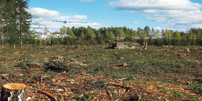 deforestacionmasiva2