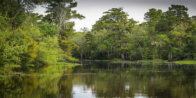 deforestacionmasiva3