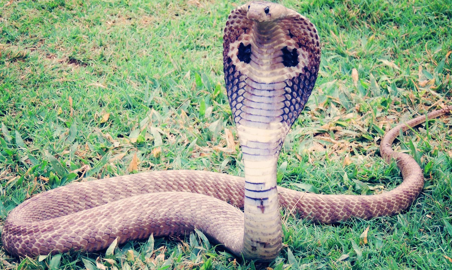 La impresionante Isla de las Cobras