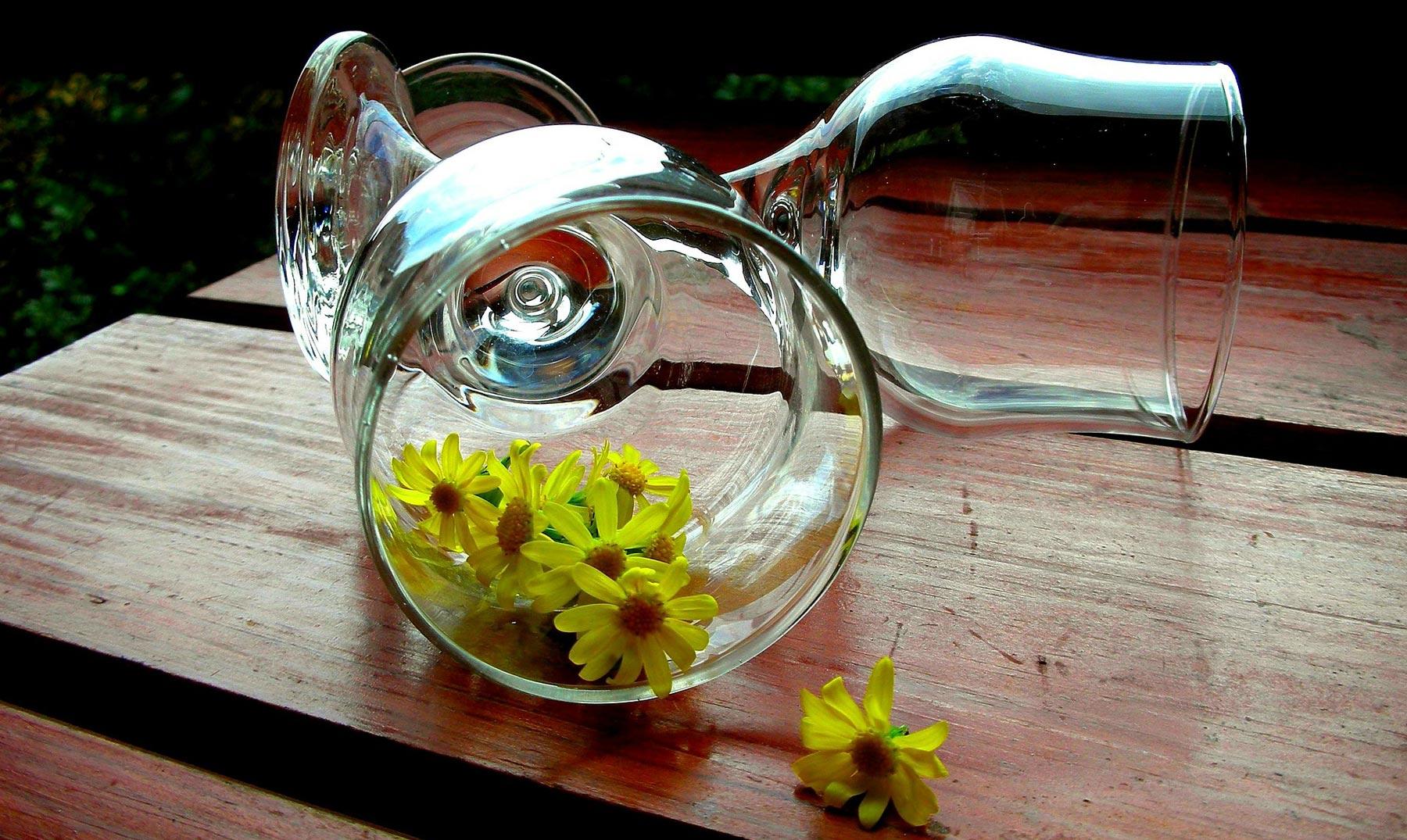 9 plantas medicinales para tener en casa