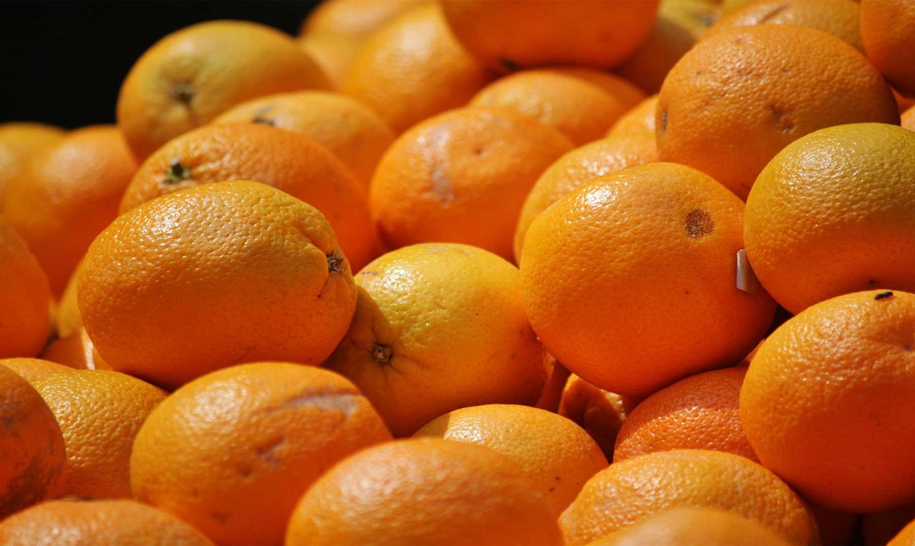 Cítricos: mejor plantar que comprar