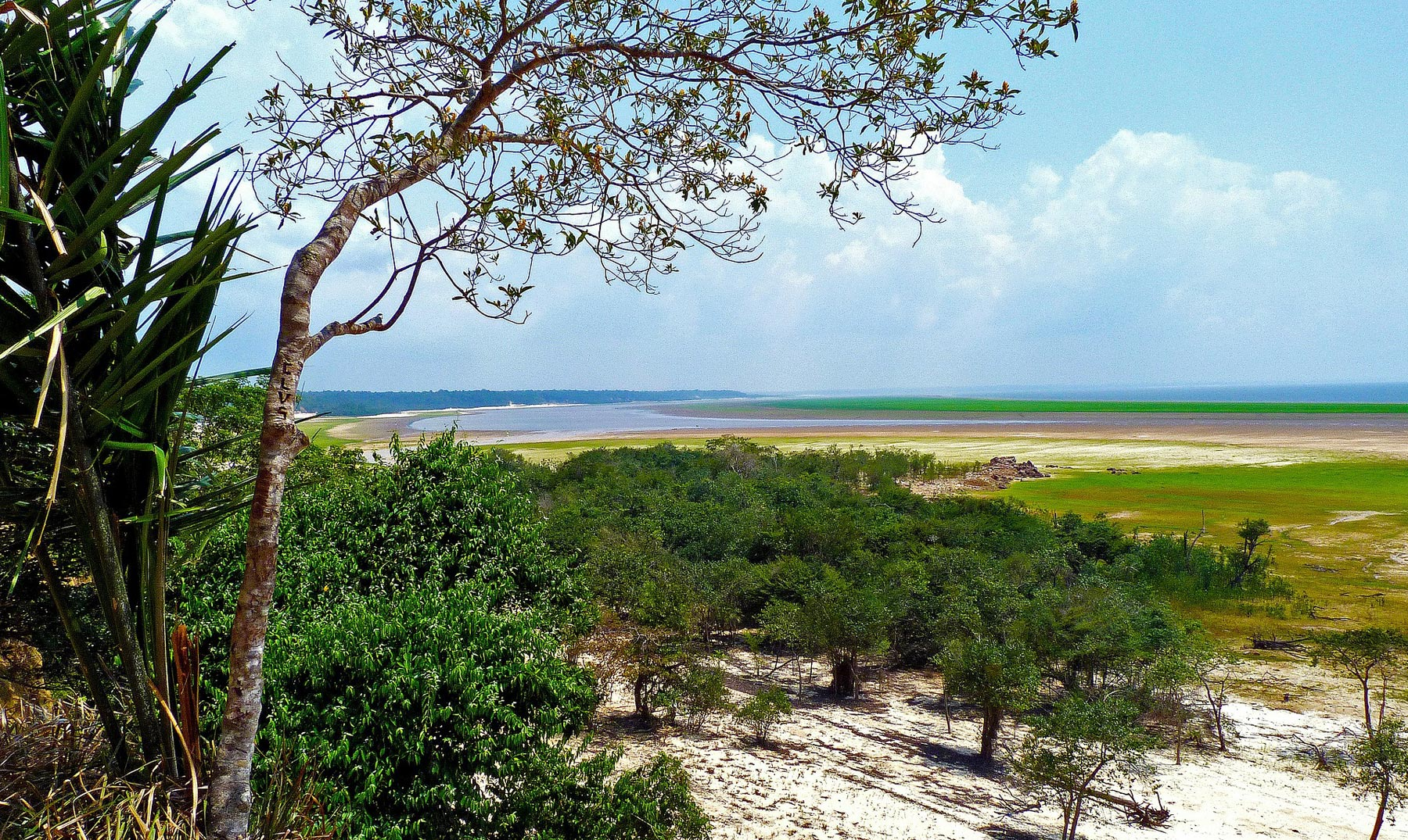 Selva Amazónica: la mayor biodiversidad