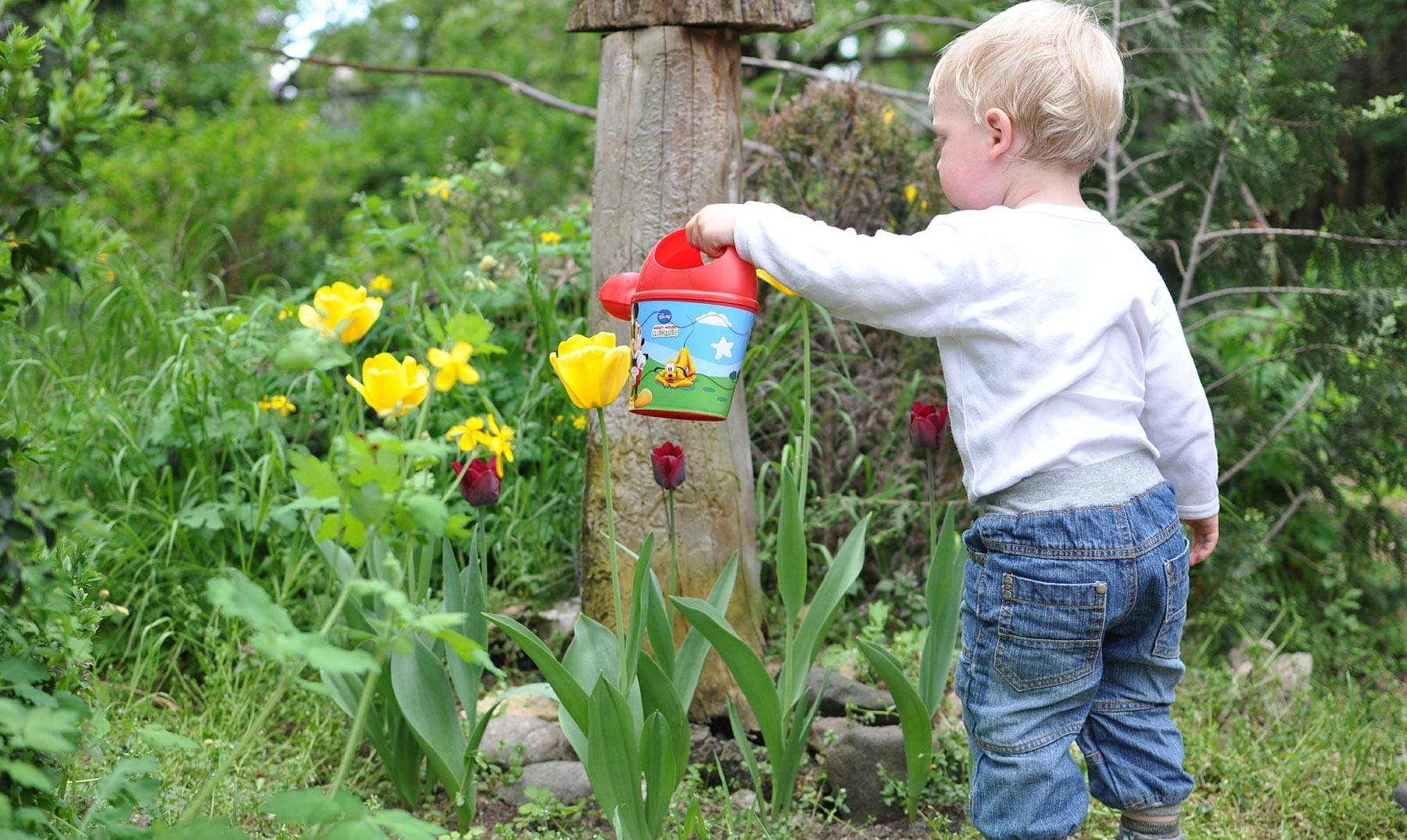 2 ecotrucos para los que aman su jardín