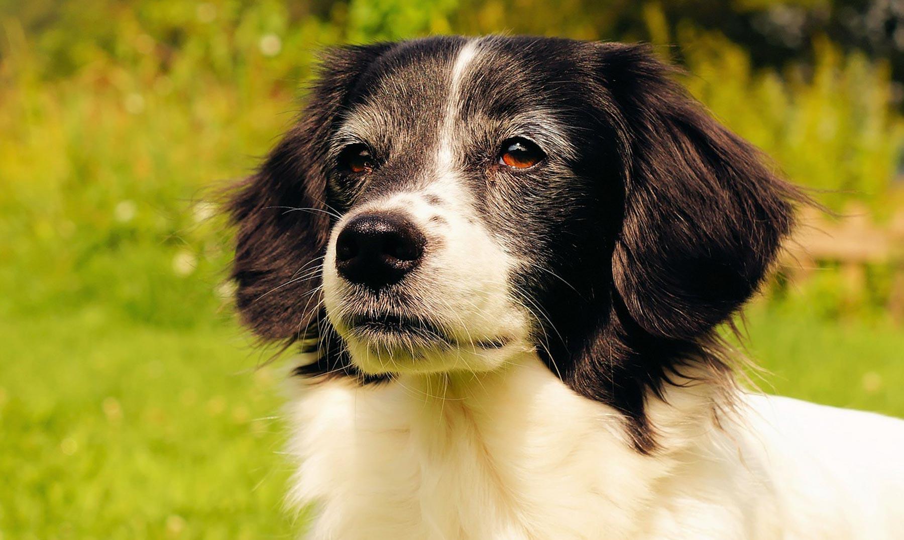 Una app móvil para ayudar a los perros