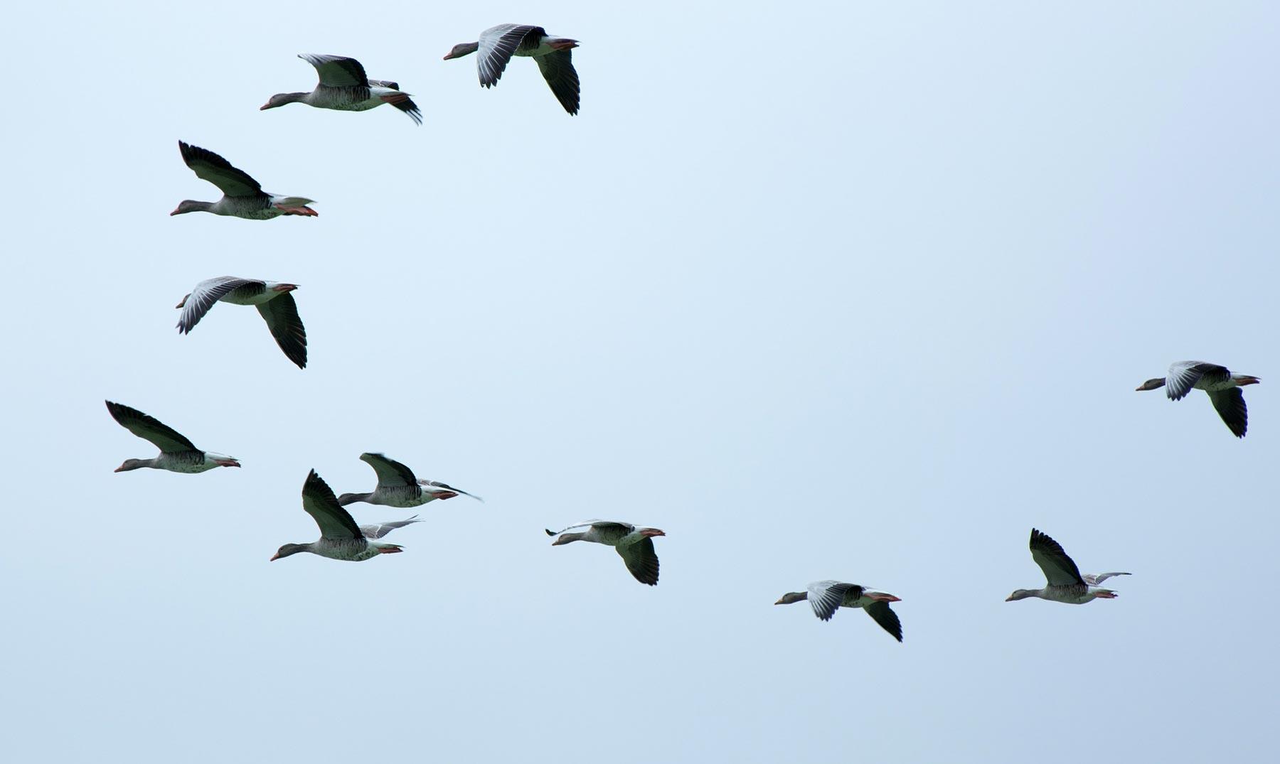 Comportamiento humano y aves periurbanas