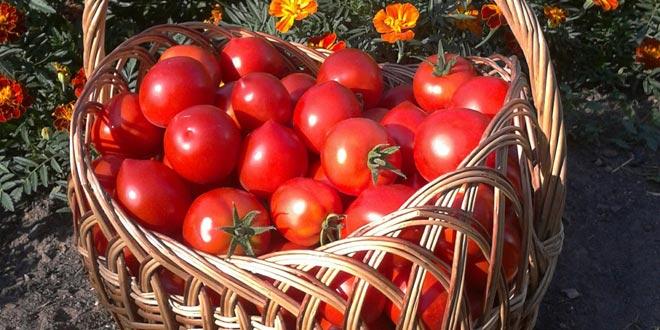 harvest (2)