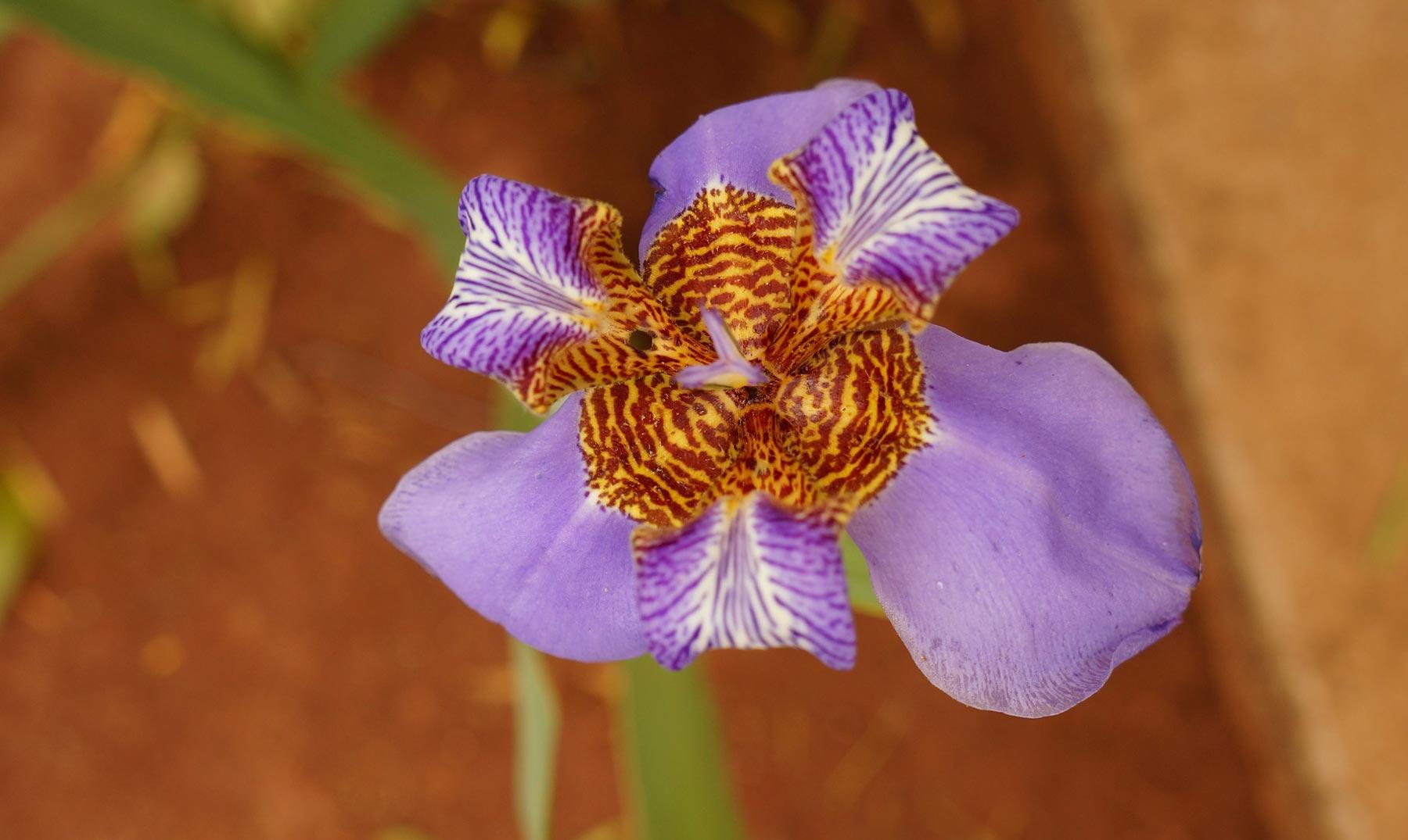 Conoce un refugio de orquídeas