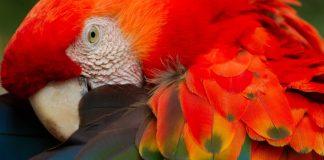Ecoturismo y Guacamayos Rojos en el centro ecoturístico de Chiapas