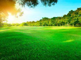 Césped artificial, una alternativa ecológica interesante