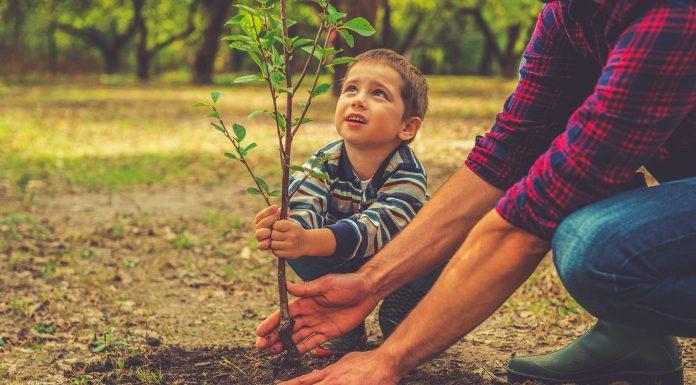 30 frases del medio ambiente para protegerlo de la actividad humana 0