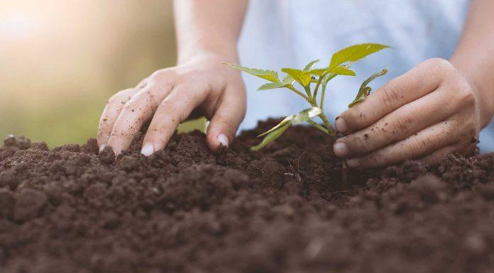 ¿Cómo crear un fertilizante natural?