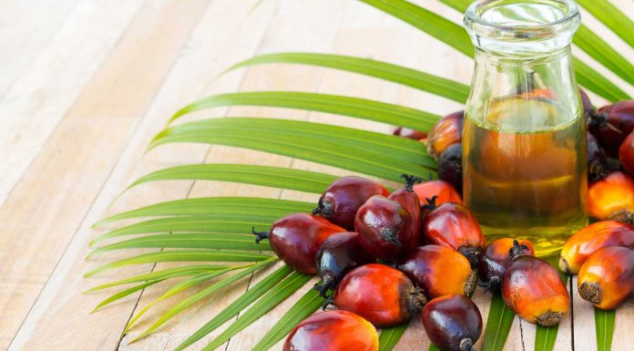 Aceite de palma en el chocolate, un problema medioambiental
