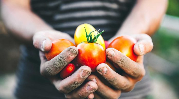 Cultiva la paciencia y la voluntad sembrando
