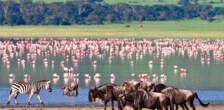 El Eden africano de Ngorongoro