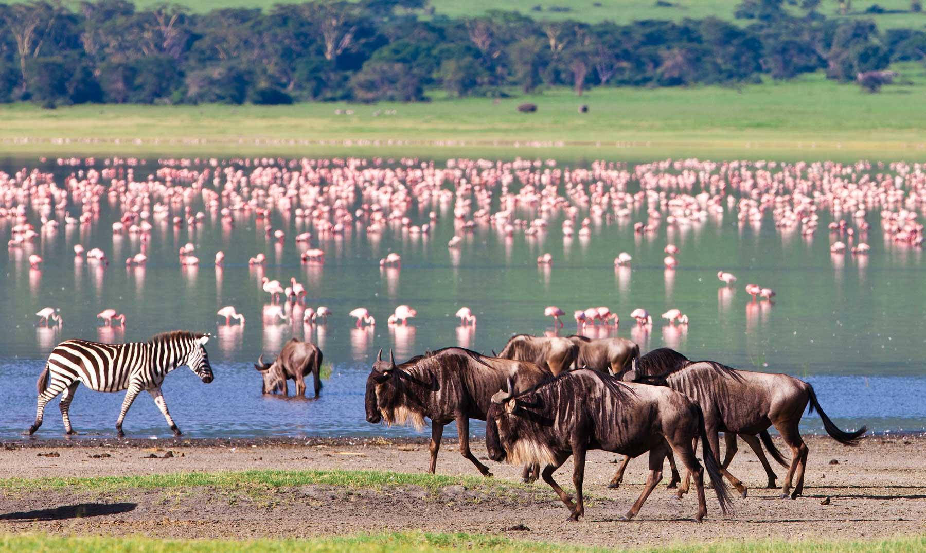 El Edén africano de Ngorongoro