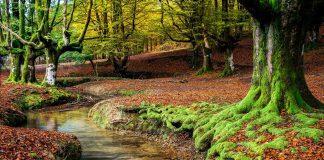 El enclave mágico de Urederra, Navarra