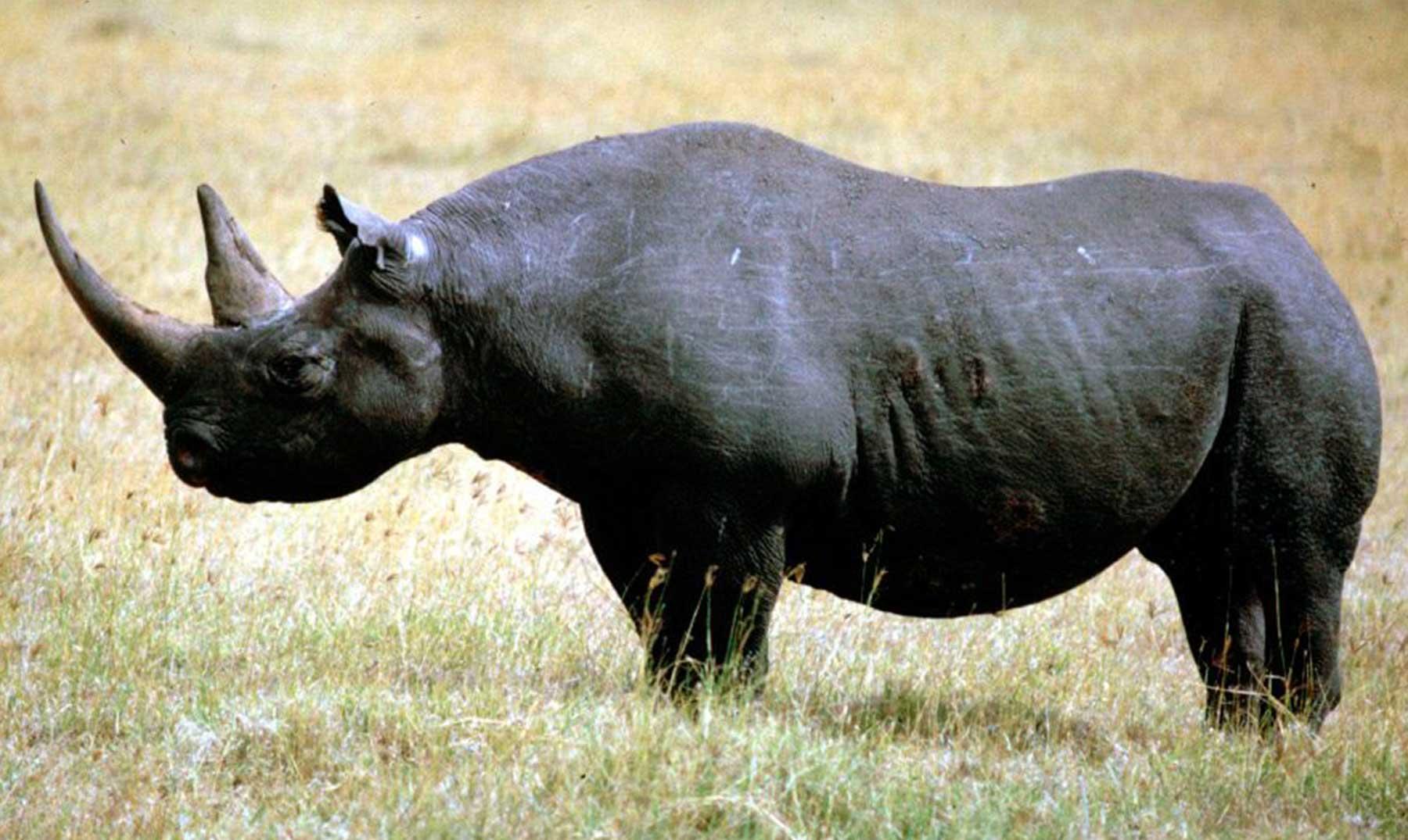 5 Especies de animales desaparecidas