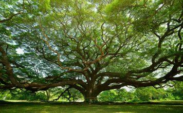 Seis razones por las que necesitamos a los árboles en nuestras vidas