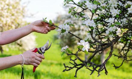 ¿Por qué es mejor podar los árboles en su época?