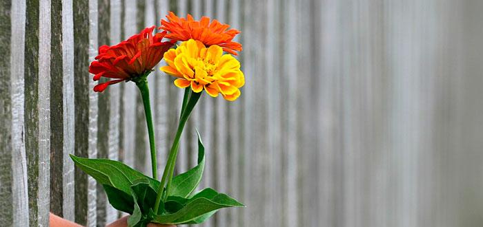 Sorprende a tus amigos y seres queridos con flores a domicilio 2