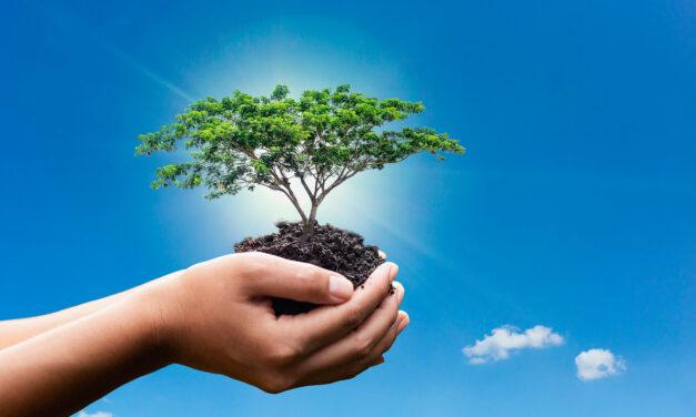 Hábitos responsables que contribuyen a salvar el ecosistema