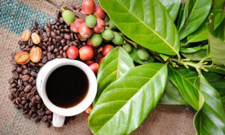 ¿Es lo mismo café en grano ecológico que natural?